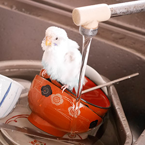 鳥フォトコンテスト「ちろちゃん」さん