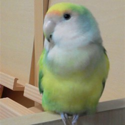 鳥フォトコンテスト「のえる」さん