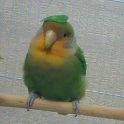 鳥フォトコンテスト「ピヨル」さん