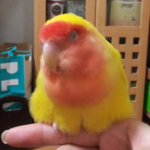 鳥フォトコンテスト「ピッピ」さん