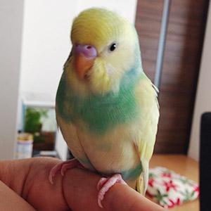 鳥フォトコンテスト「メロン」さん