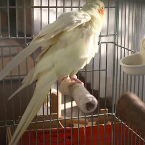 鳥フォトコンテスト「碧ちゃん」さん