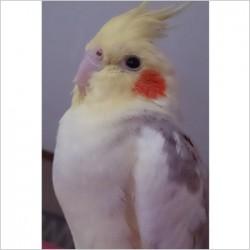 鳥フォトコンテスト「モン」さん