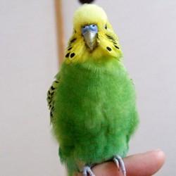 鳥フォトコンテスト「なみ」さん
