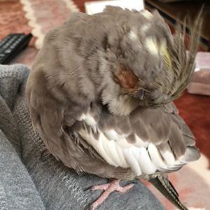 鳥フォトコンテスト「ぴの」さん
