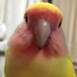 鳥フォトコンテスト「るっち」さん