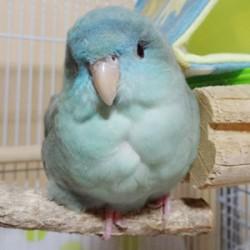 鳥フォトコンテスト「朔」さん