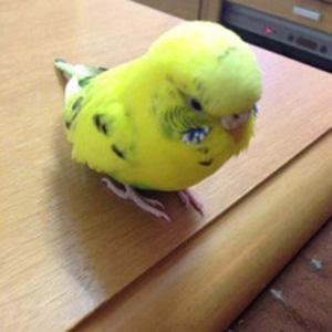 鳥フォトコンテスト「るび」さん