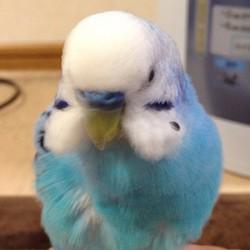 鳥フォトコンテスト「ピー」さん