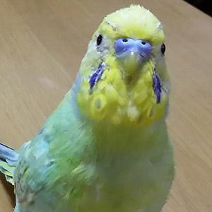 鳥フォトコンテスト「みっくん」さん