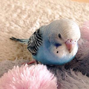 鳥フォトコンテスト「ロキちゃん」さん