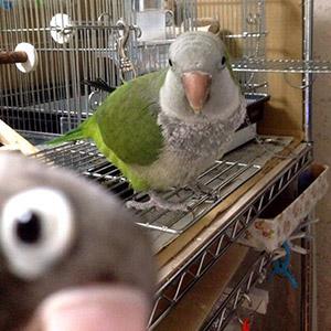 鳥フォトコンテスト「茶豆」さん