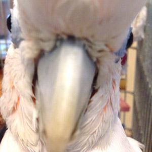 鳥フォトコンテスト「栗仔」さん