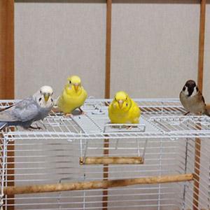 鳥フォトコンテスト「おもち・おかき・おこめ・あらし」さん