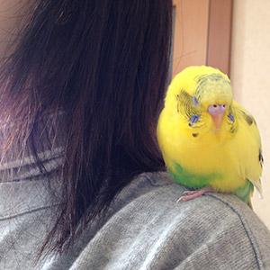 鳥フォトコンテスト「ぴぴ」さん