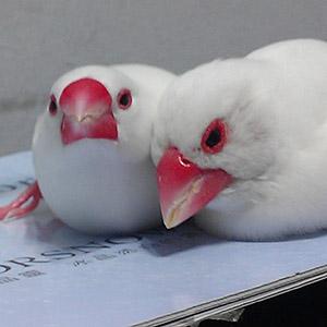 鳥フォトコンテスト「Mili・Shiro」さん