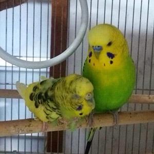 鳥フォトコンテスト「エコル・つく」さん