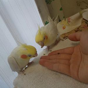 鳥フォトコンテスト「ポッキー・カール」さん