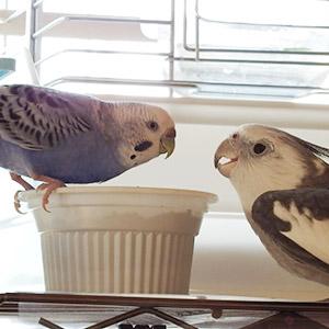 鳥フォトコンテスト「なつ・まる」さん