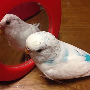 鳥フォトコンテスト「モコ」さん