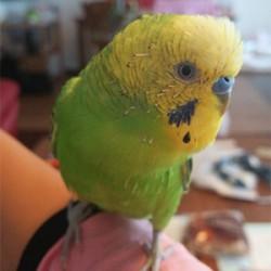 鳥フォトコンテスト「ピット」さん