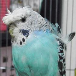 鳥フォトコンテスト「さりぃ」さん