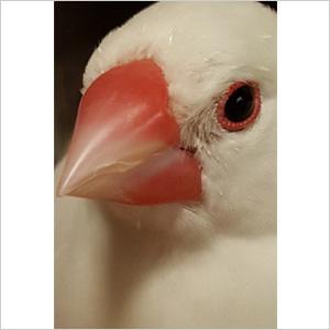 鳥フォトコンテスト「ユキ」さん