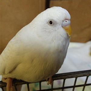 鳥フォトコンテスト「ゴン」さん