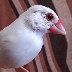 鳥フォトコンテスト「棗」さん