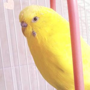 鳥フォトコンテスト「Perikon」さん