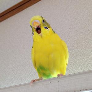 鳥フォトコンテスト「たんぽぽ」さん