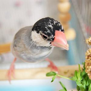 鳥フォトコンテスト「ステラ」さ