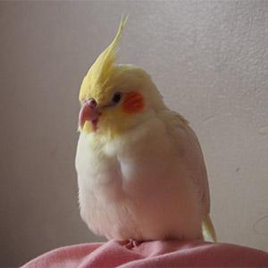 鳥フォトコンテスト「フラン」さん