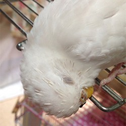 鳥フォトコンテスト「いとちゃん」さん