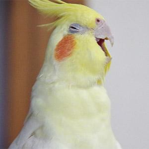 鳥フォトコンテスト「すあま」さん
