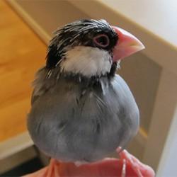 鳥フォトコンテスト「ルッカ」さん