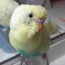 鳥フォトコンテスト「夏樹」さん