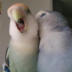 鳥フォトコンテスト「つく・すみ」さん