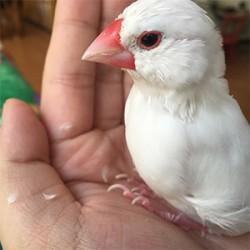 鳥フォトコンテスト「ジュディ」さん
