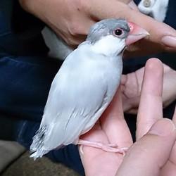 鳥フォトコンテスト「薫」さん