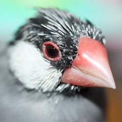 鳥フォトコンテスト「るるか」さん