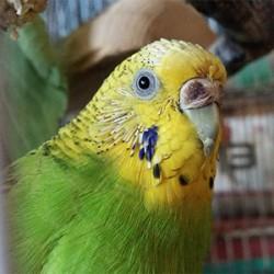 鳥フォトコンテスト「リン」さん