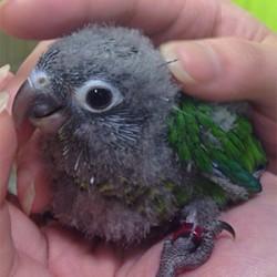 鳥フォトコンテスト「あずき」さん