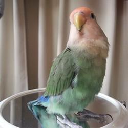 鳥フォトコンテスト「桃太郎」さん