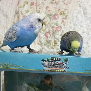 鳥フォトコンテスト「モアさん・しいちゃん」さん