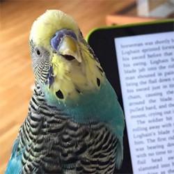 鳥フォトコンテスト「チュパ」さん