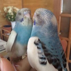 鳥フォトコンテスト「アイちゃん」さん