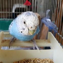 鳥フォトコンテスト「そらちゃん」さん