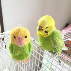 鳥フォトコンテスト「Torimbone」さん