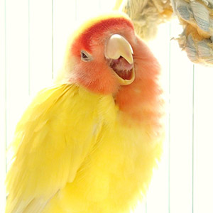 鳥フォトコンテスト「ルビー」さん